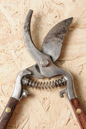 pruning scissors: old pruning scissors isolated on wooden desk