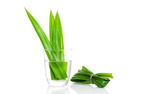pandan: closeup green fresh Pandan leaves, Thai herbal