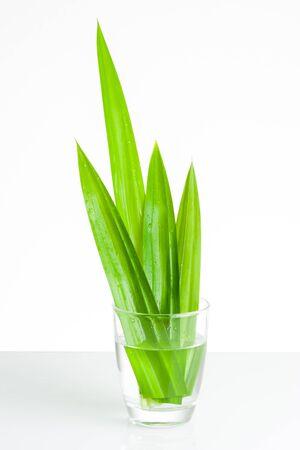 tectorius: closeup green fresh Pandan leaves, Thai herbal
