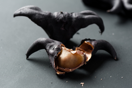 Water caltrop on a black background, Water Chestnut, Trapa natans