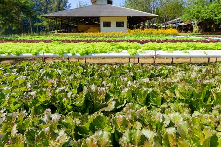 Groenten die groeien met Hydroponic Gardening System. Hydroponic groeit met minerale voedingsoplossingen om de planten in water te voeden, zonder aarde.