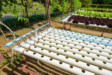 Hydroponic 園芸システム。水耕成長水土壌なしで植物を供給するのにミネラル栄養解決を使用します。