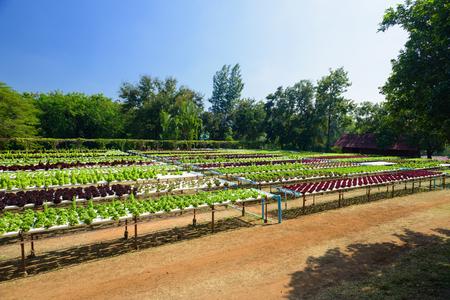 野菜水耕園芸システム、成長しています。水耕成長水土壌なしで植物を供給するのにミネラル栄養解決を使用します。 写真素材 - 87100954