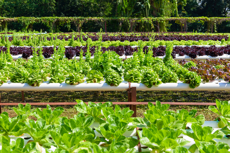 野菜水耕園芸システム、成長しています。水耕成長水土壌なしで植物を供給するのにミネラル栄養解決を使用します。 写真素材