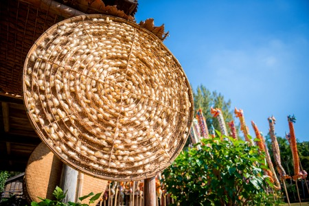 Silkworm cocoons in bamboo threshing basket. Thai traditional silk production process.