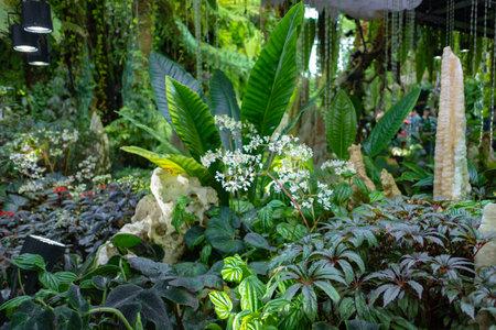 Flowers blossom in the indoor garden. garden decoration and arrangement.
