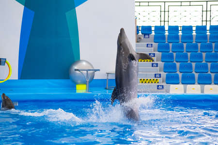Clever dolphin performing in the show. Dolphin show in Thailand.