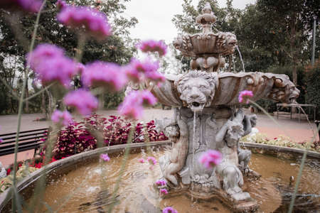Vintage style of fountain in the garden with purple flowers.