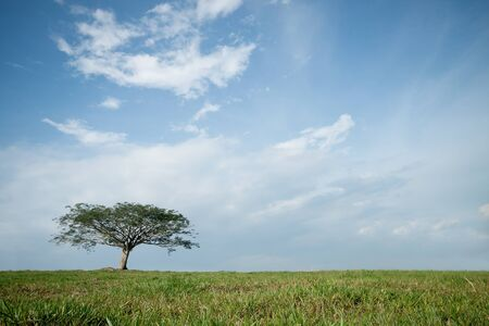 isolated tree with blue sky background photo