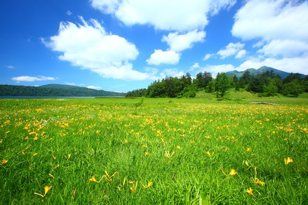 plateau of flowers: flowers of oze national park  in japan