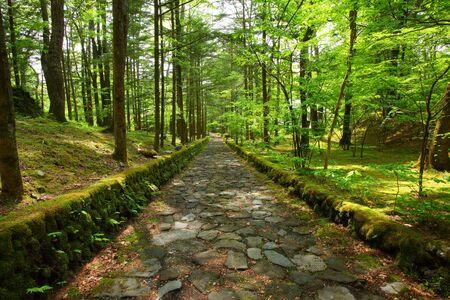 zpevněné: stone paved road
