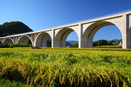 expressway: Highway bridge with rice field