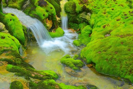 gush: Green moss with water stream
