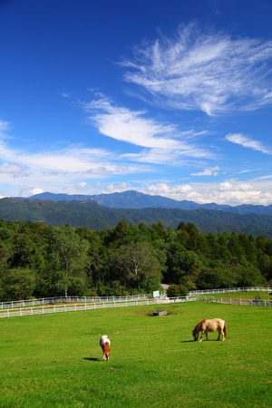 bracing: Horse and blue sky of plateau in japan
