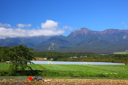 tableland: Vegetable field and mountain in japan