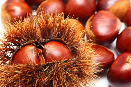 Japanese chestnut close up shoot photo