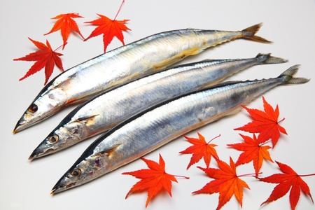 Saury and maple leaves on white background photo