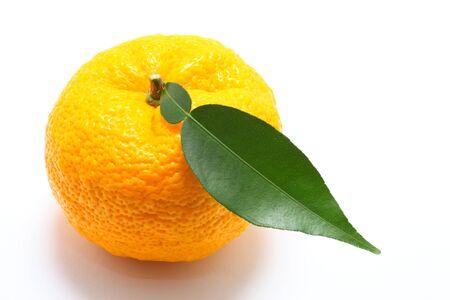 cidra: Citron sobre fondo blanco cerca disparar