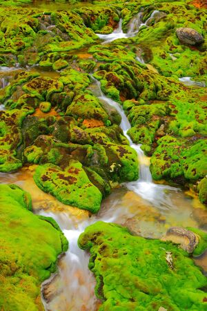 Green moss with water stream in japan photo