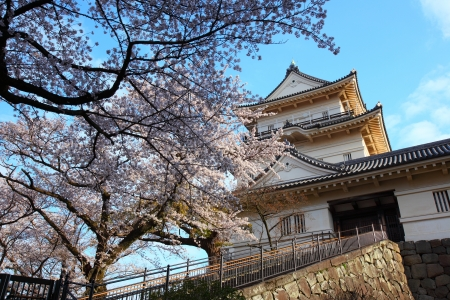 odawara: Odawara Castle and cherry blossom in japan