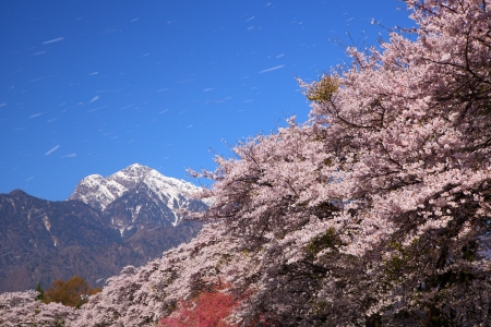 Cherry tree and southern alps of Japan, Yamanashi Stock Photo - 14555791