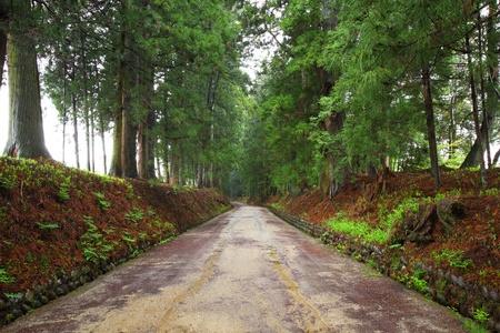 cedar: Cedar avenue of Nikko, LongestAvenue, Toctigi, Japan Stock Photo