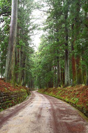 cedar tree: Cedar avenue of Nikko, LongestAvenue, Toctigi, Japan Stock Photo