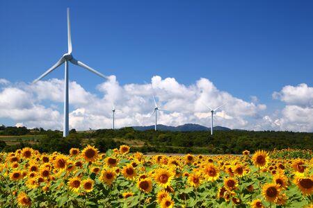 fukushima: Sunflower field with windmill in Fukushima, Japan Stock Photo