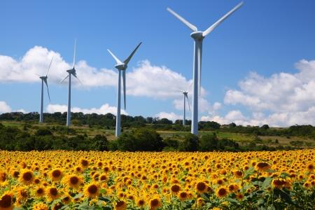 Sunflower field with windmill in Fukushima, Japan Stock Photo - 17307826