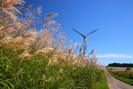 Silver grass with windmill and straight way Stock Photo - 17308188