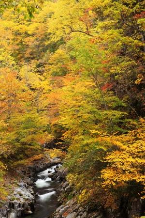 fukushima: Autumn colours of Nakatsugawa valley in Fukushima, Japan