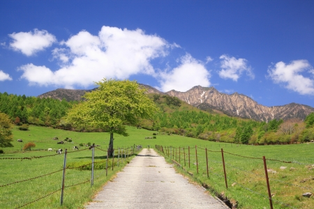 Straight road in meadow and Mt. Yatsugatake, Yamanashi, Japan photo