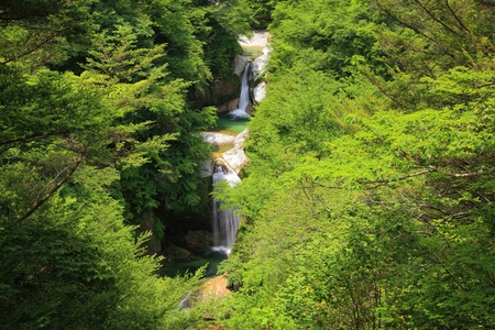 Waterfall of fresh green, Name is Jinjyataki, Yamanashi, Japan
