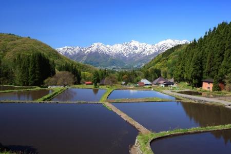 paddy fields: Japan Alps and terrace paddy field, Hakuba village Aoni, Nagano, Japan