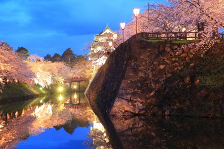 lightup: Light up of Hirosaki castle and cherry blossoms, Aomori, Japan