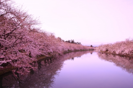 Moat and cherry blossoms of Hirosaki castle, Aomori, Japan Stock Photo