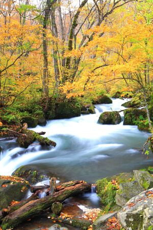 Autumn Colors of Oirase Stream, Aomori, Japan photo
