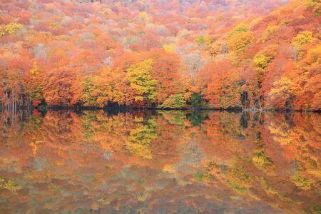 Autumn colours of pond, Tsutanuma, Aomori, Japan