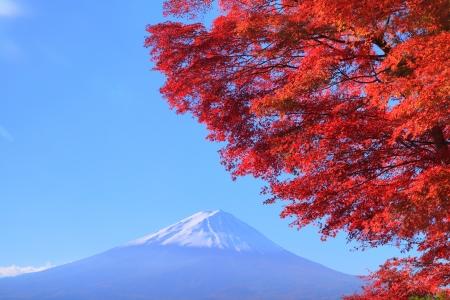 Mt. Fuji with red leaves, Yamanashi, Japan photo