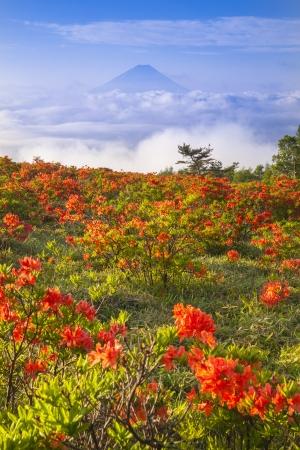 sea scenery: Japanese azalea with Mt  Fuji, Yamanashi, Japan
