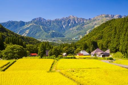 paisaje rural: Alpes japoneses y los campos de arroz, pueblo de Hakuba, Nagano, Japón