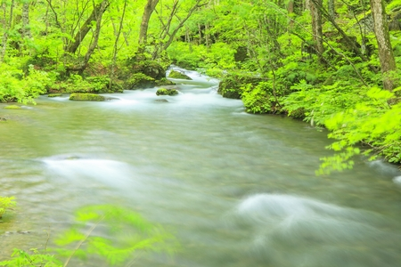 Summer of Oirase Stream, Aomori, Japan photo