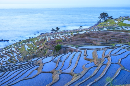 hokuriku: Rice terraces at twilight, Shiroyone senmaida, Ishikawa,Japan