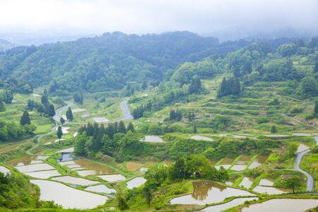 rice terrace: Hoshitouge Rice Terrace, Niigata, Japan
