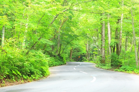 Road passing through the fresh green, Aomori, Japan