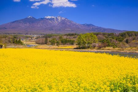 garden scenery: Rape flowers and Mt. Yatsugatake, Yamanashi, Japan Stock Photo