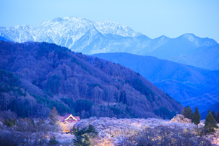 light up: Light up of Cherry Blossoms and Japan Alps, Takato Castle Site Park, Nagano, Japan Editorial