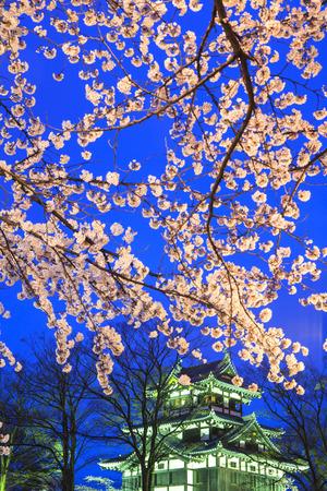 light up: Luce di Castello Takada e fiori di ciliegio, Niigata, Giappone Editoriali
