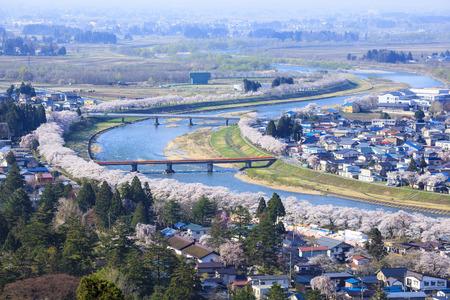 Hinokinaigawa River's Bank of Cherry Trees, Kakunodate, Akita, Japan 스톡 콘텐츠