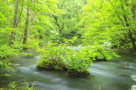 Summer of Oirase Stream, Aomori, Japan